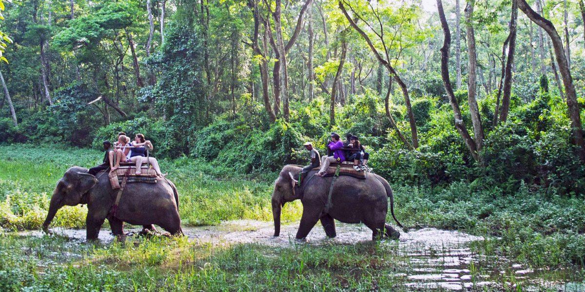 Jungle sufari in Chitwan National Park