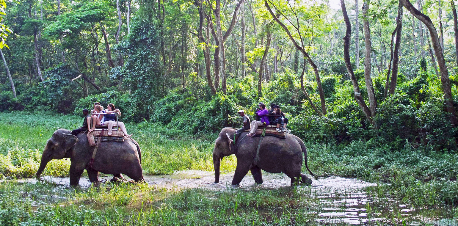 Jungle sufari in Chitwan National Park
