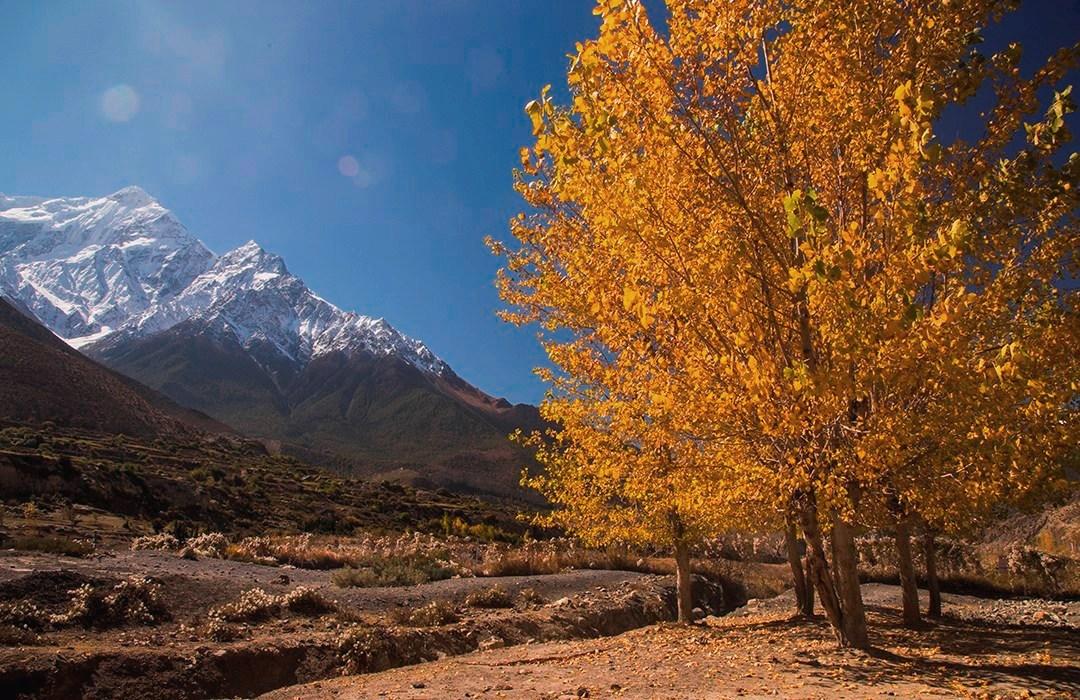 Scenic view in autumn season